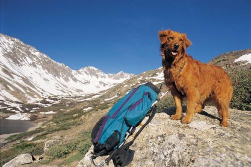 Casas admiten mascotas Asturias