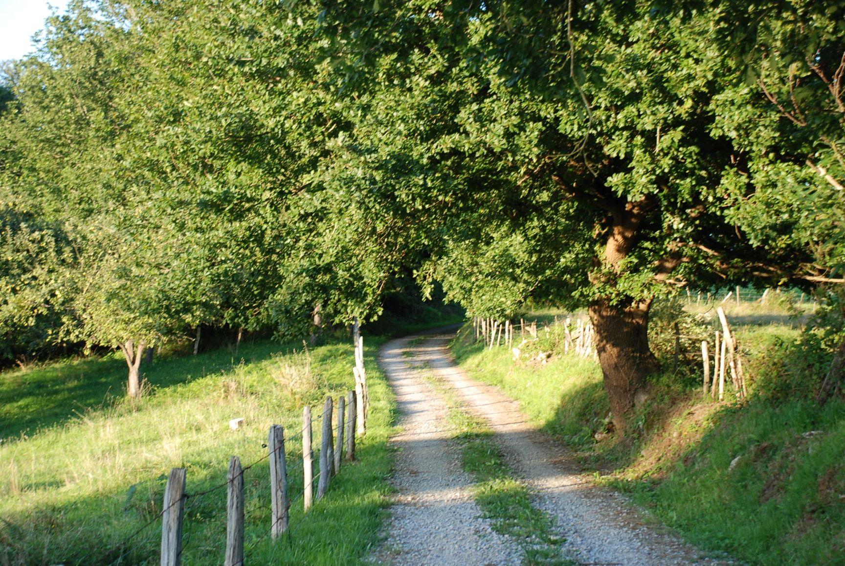 Caminos de Asturias | camino de Brez Asturias